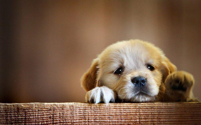 Bu köpek bir bebek!